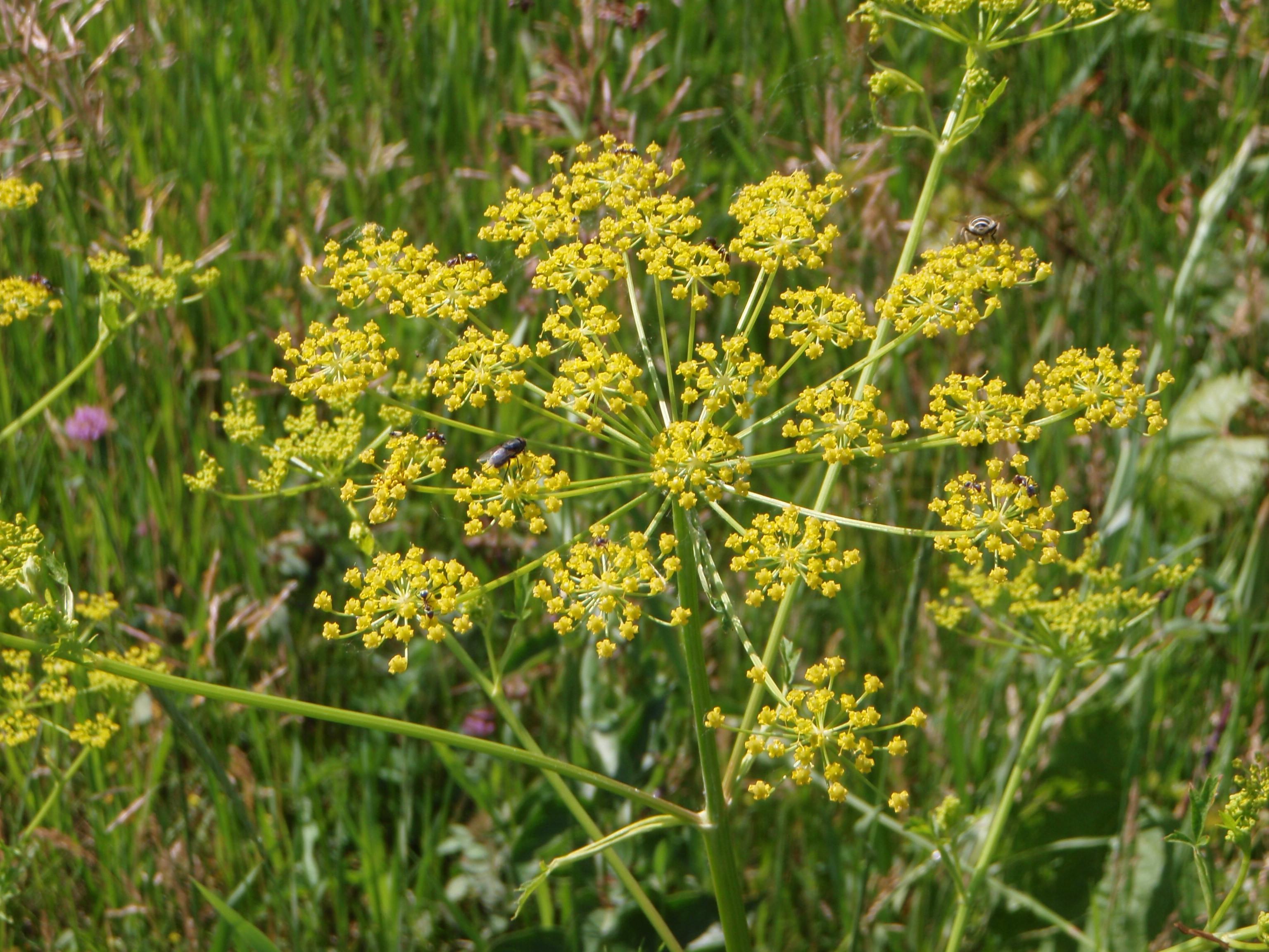 Calumet County Wi Official Website Terrestrial Invasive Species