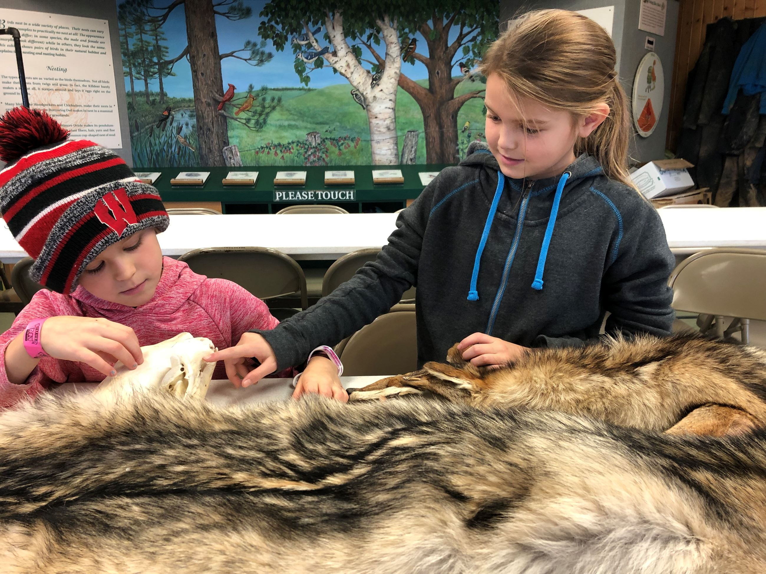 Two girls are looking at a wolf skull and pelt.