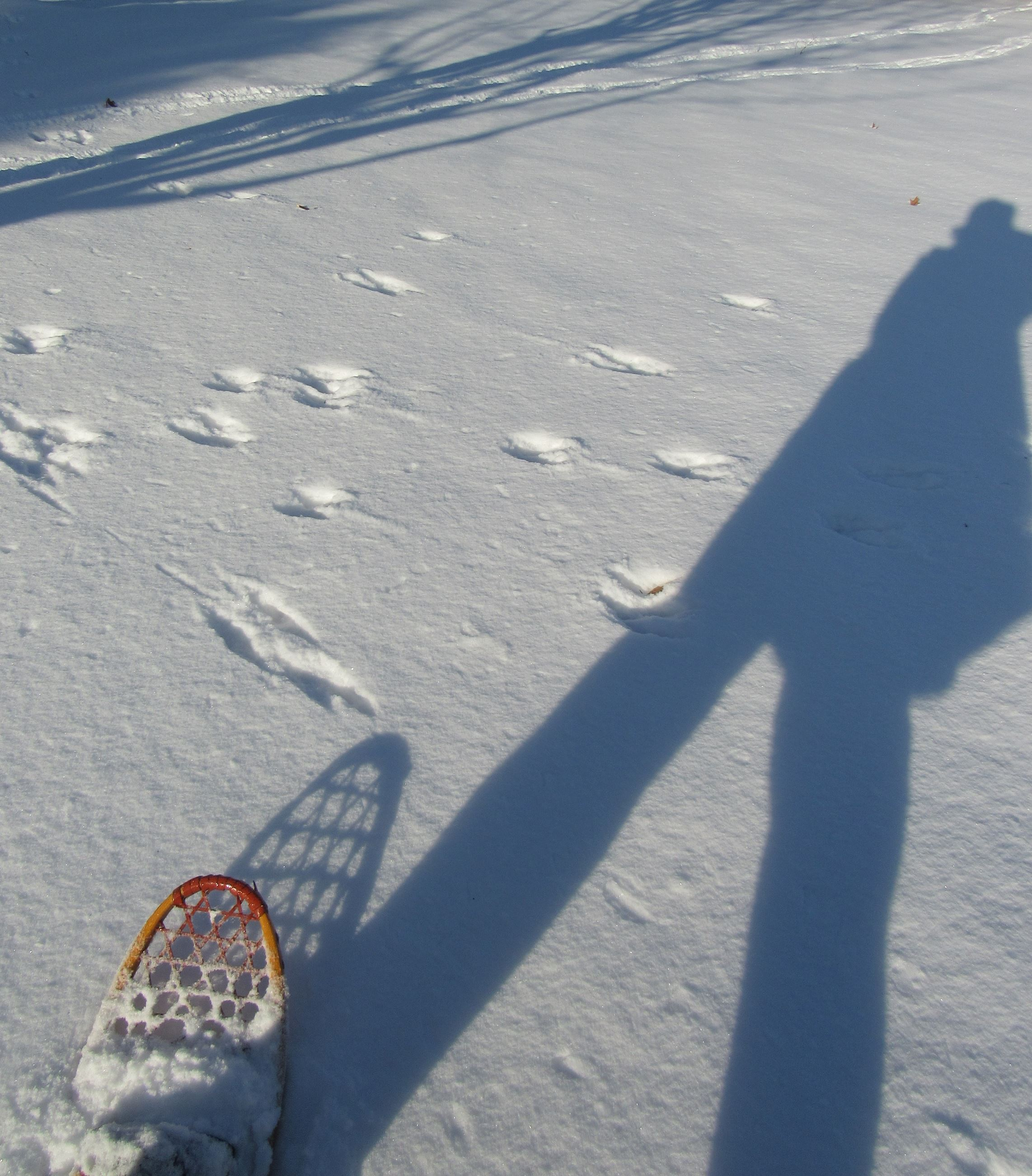 snow with a shadow of a person. There is the toe of a traditional snowshoe in the bottom left corner